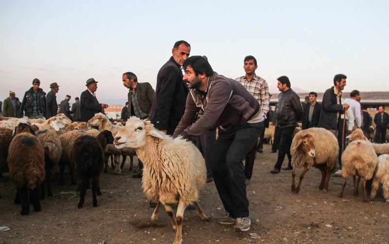 مراکز عرضه ی دام زنده در تهران